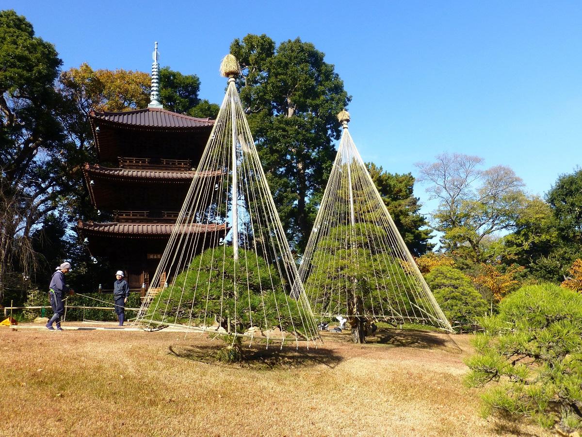 Costumbres fiestas festivales y tradiciones corea del for Arboles japoneses para jardin